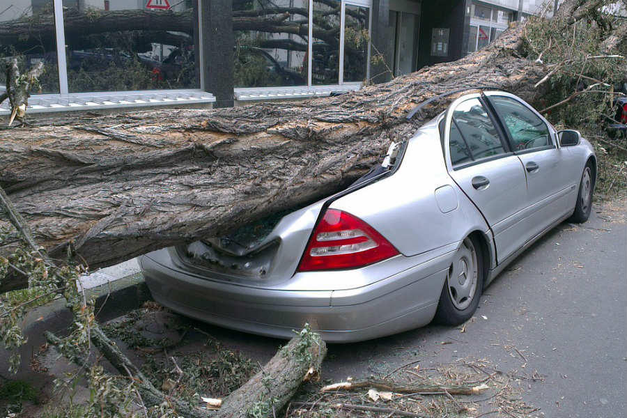 Photo of tree on car